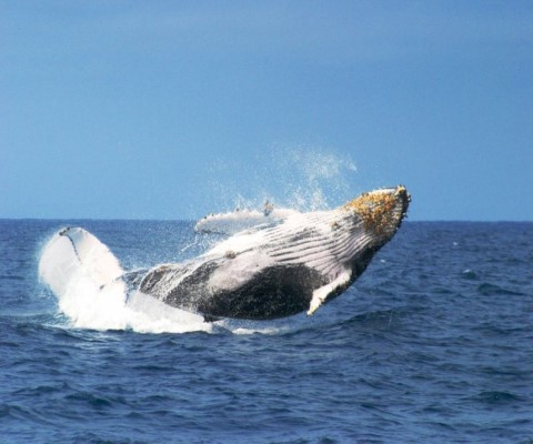 Puerto López and the Humpback Whale Watching Festival