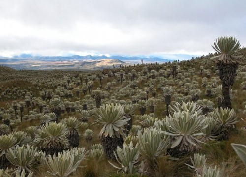 Tourist Attractions in Carchi