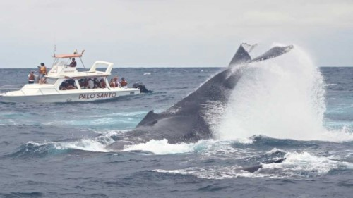 Lodging Package + Whale Observation in Puerto López